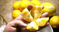 Κόψτε ένα λεμόνι βάλτε λίγο αλάτι και αφήστε το στην κουζίνα